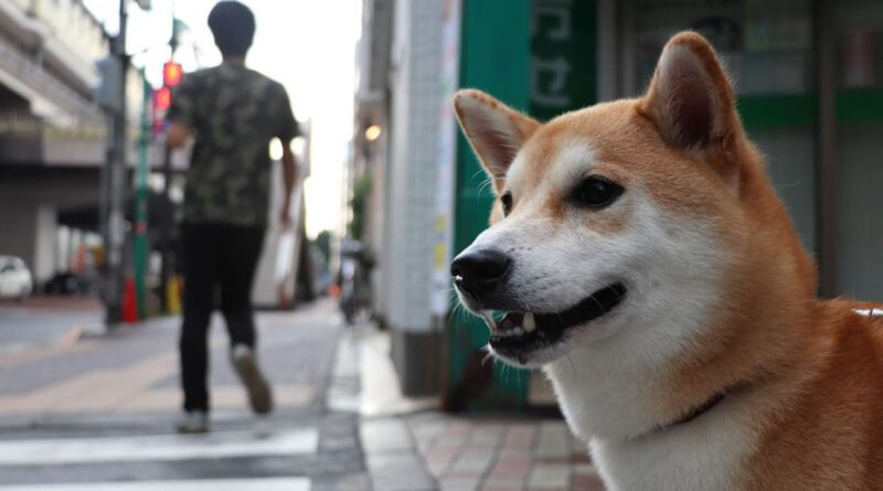 Dogecoin (DOGE) Search Volume on Baidu Explodes to 10x of 2017 Levels Altcoin News