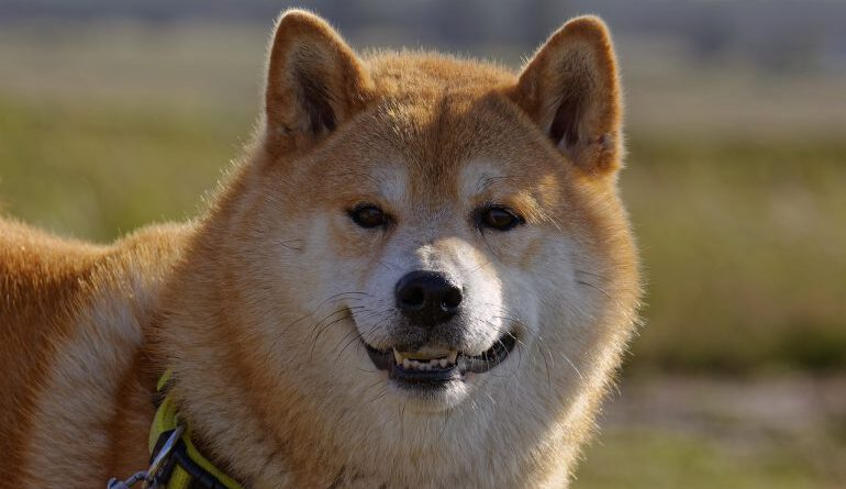 DOGE Inches Closer to Flippening BNB Hours Before Elon Musk Hosts SNL Altcoin News